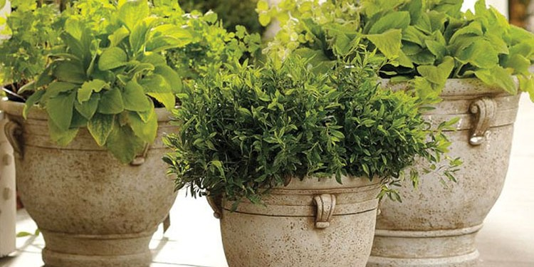brittany planters weathered limestone look a like pottery barn