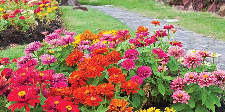denis_canada-bloom-garden-designer-flowers