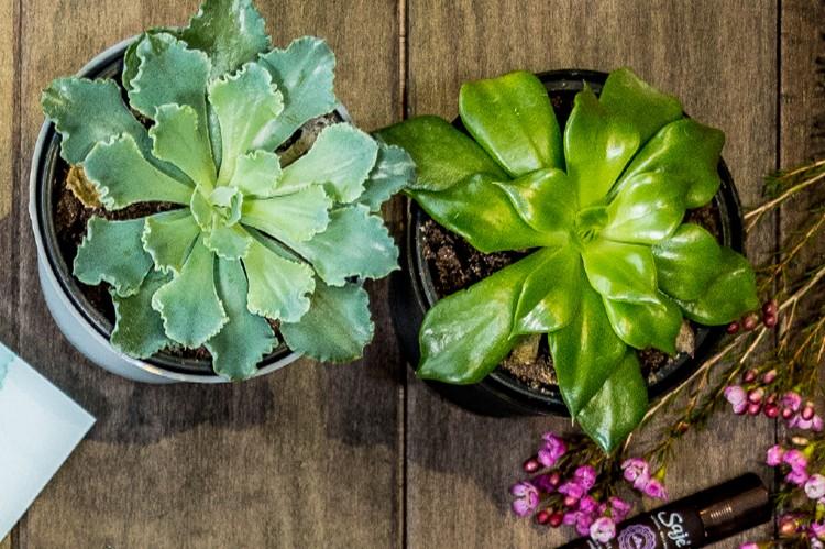 7. Succulents