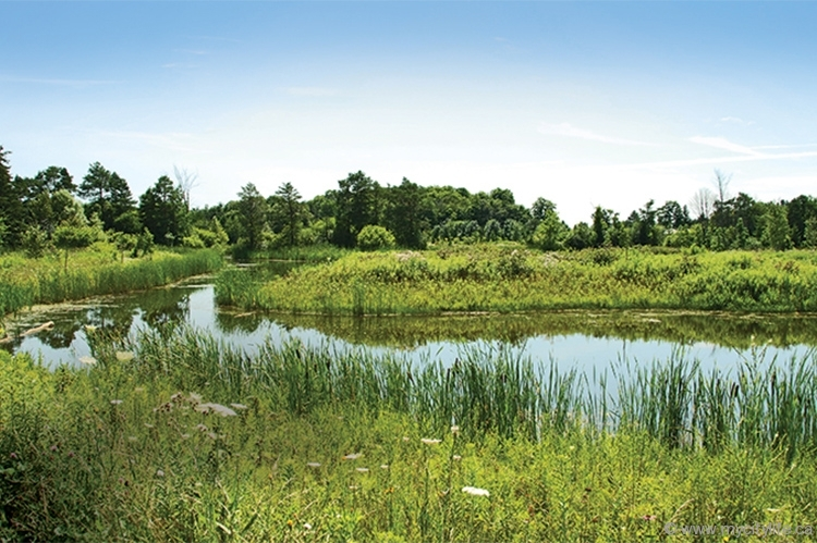 Phyllis Rawlinson Park, one of the many natural spaces in Richmond Hill, is a testament to the greenness of the GTA town — a status that's currently being threatened by reduced and capped parkland allotment