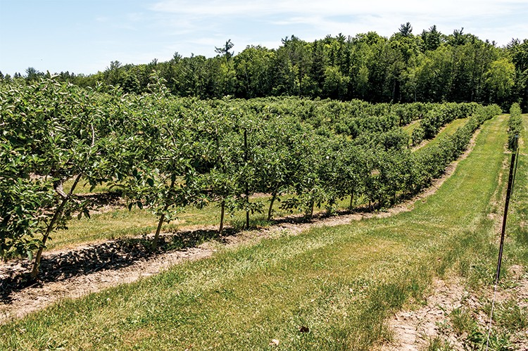 Pine Farms Orchard in King City