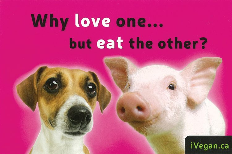 One of the signs used during the Toronto Pig Save's weekly vigils